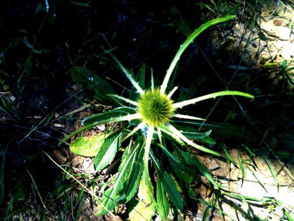 http://she-wolf.cowblog.fr/images/2/IMG2064.jpg