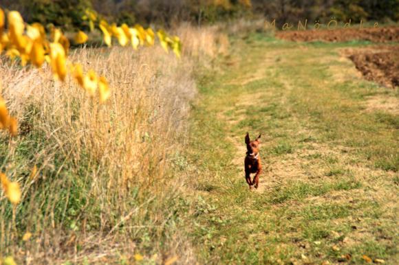 http://she-wolf.cowblog.fr/images/IMG3981.jpg